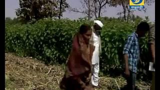 Video Amchi Mati Amchi Mansa 28 March 2017 ' यशोगाथा - रेशीम उत्पादक शेतकऱ्यांची... ' download MP3, 3GP, MP4, WEBM, AVI, FLV Agustus 2018