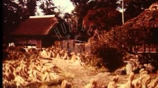 Farming and agriculture in Japan, 1960's --Film 3860
