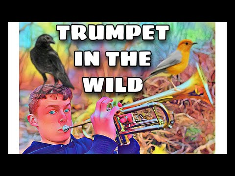 Trumpet in the Wild   Comedy Short