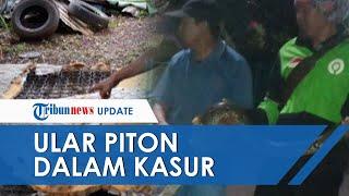 Ular Piton Ditemukan di Dalam Kasur di Tangerang Selatan, Awalnya Curiga dengan Tonjolan