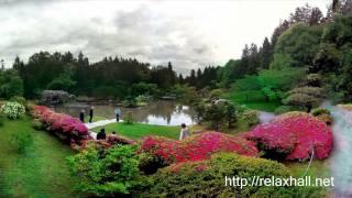 Musica Chinesa para Meditar e Dormir - Relaxamento Profundo Sono Tranquilo
