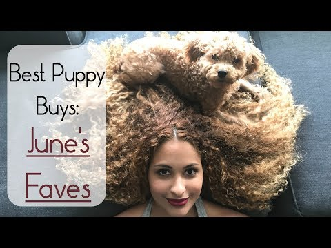best-puppy-buys:-june's-faves-🐩