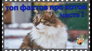 Самые интересные факты про кошек #2
