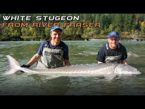 Wild Water Adventures A Return to the Land of Sturgeons and Salmons  1st part - Fraser Canyon