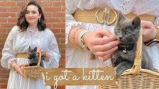 I got a kitten vlog  new kitten haul