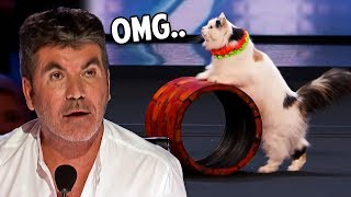 10 Incredible Animal Acts On America's Got Talent