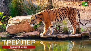 По следам амурского тигра (ТРЕЙЛЕР)