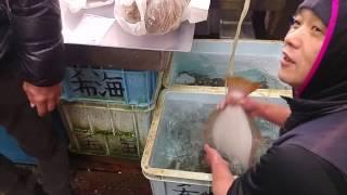 Video Al mercato del pesce a Tokyo4 download MP3, 3GP, MP4, WEBM, AVI, FLV Agustus 2017