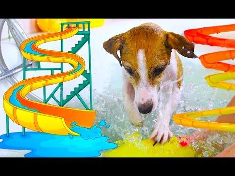 АКВАПАРК Для Собаки ПРАНК ИГРУШКОЙ В ВОДЕ | Elli Di
