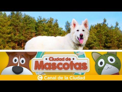 """<h3 class=""""list-group-item-title"""">Conocemos perros que pueden detectar cáncer en humanos con su olfato y más en Ciudad de Mascotas</h3>"""