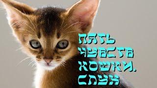 Пять чувств кошки  Слух