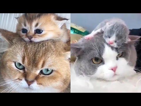 Как Выглядят Детеныши Кошек Разных Пород!