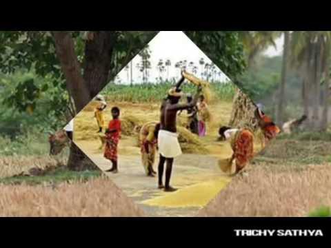 ye chinna machan sollu pulla (tamil gramiya song)