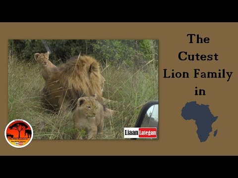 Cutest Lion Family in Africa