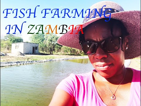 5 TIPS TO START FISH FARMING IN ZAMBIA AS A BEGINNER LIKE ME | MY STORY