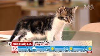 Півторамісячні кошенята Люк і Глаша шукають господарів