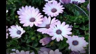 Brenda Lee - Someone To Love Me