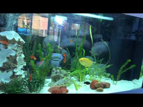 My juwel rio 125 tropical fish tank