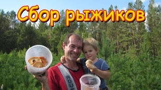 Семья Бровченко. Поездка за грибами - рыжиками. (09.16г.)