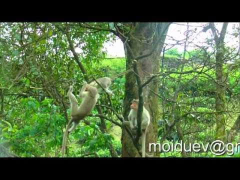 monkey jokes - YouTube