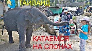 �������� ���� VLOG катаемся на слонах в Тайланде!  Кормим слонов бананами  Купание слонов ������