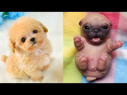 Baby Dogs - Cute and Funny Dog Videos Compilation #24 | Aww Animals