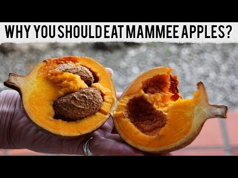 why-you-should-eat-mammee-apples-here-are-some-impressive-reasons