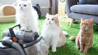 고양이 털로 솜사탕 만들기, 청소하는 날