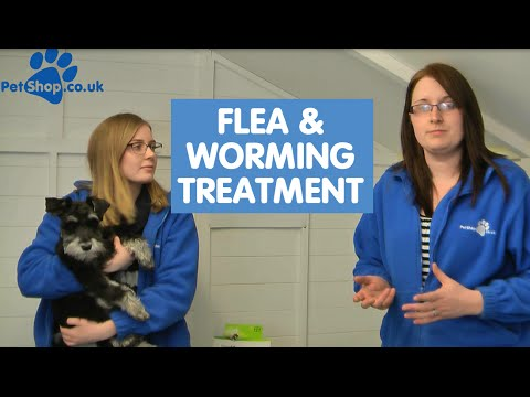 Drontal Cat Worming Tablet  Cheap Prices | PetShop co uk