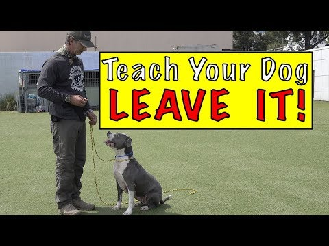 Teach Your Dog LEAVE IT - YUK Command - Leave it Command - Protect Your DOG!