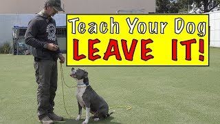 Teach Your Dog LEAVE IT  YUK Command  Leave it Command  Protect Your DOG!