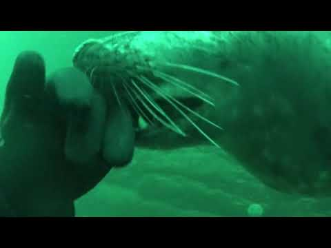 Diveworld Videos | Diveworld Farne Islands 2019 Vol 3
