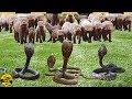 🔴 Những Trận T.Ử C.H.I.Ế.N KINH HOÀNG Nhất Của Các Loài Động Vật Trong Thế Giới Tự Nhiên