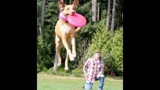 Frisbee Dog Rock Stars 2013 (Mike and Zoozoo)
