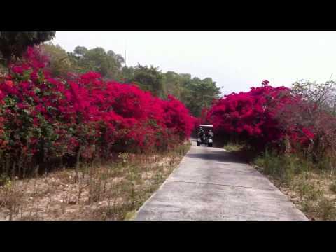 Wangjuntr Golf Park の花街道