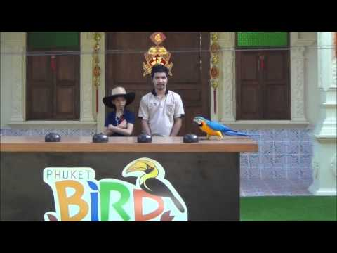 Phuket Bird Park Things to see and do in Thailand 2014