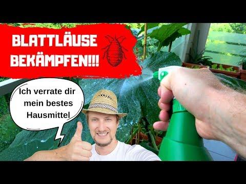 Blattläuse Bekämpfen - Das Beste Hausmittel Das Ich Kenne! 🔴