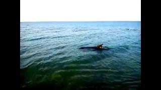 Дельфины прямо у берега!! Станица Благовещенская. Анапа 2015(, 2016-01-18T18:05:20.000Z)