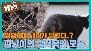 엉덩이에 새끼가 달렸다?! 길냥이 '깜냥이'의 충격적인 모습 I TV동물농장 (Animal Farm) | S…