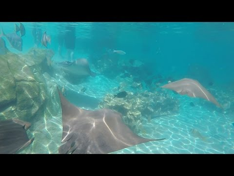 Stingray POV in the Grand Reef at Discovery Cove