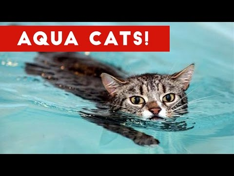 Cutest Cats Playing in Water Compilation 2017 | Best Cute Cat Videos Ever