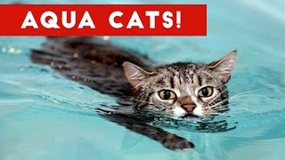 Download Cutest Cats Playing in Water Compilation 2017 | Best Cute Cat Videos Ever Mp3 and Videos