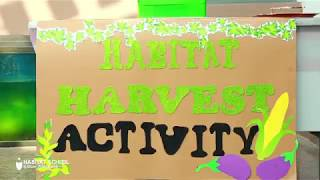 Harvest time at School,Habitat School, Al Tallah