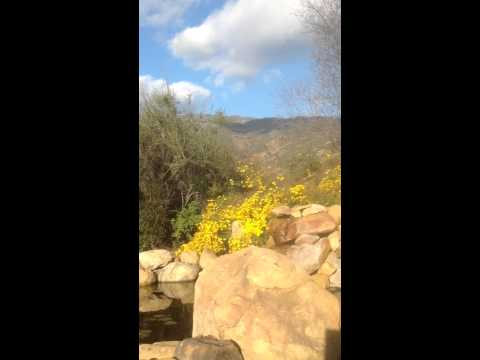 December flowers with flowing water in California 2014