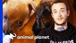 Villalobos Rescue Center Take in 7 Homeless Puppies | Pit Bulls & Parolees