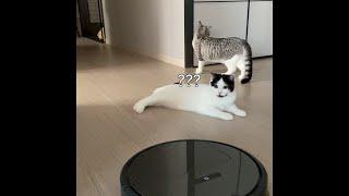 샤오미 로봇청소기 vs 고양이