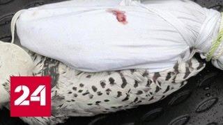 Сто тысяч долларов за птицу: на Камчатке арестовали банду контрабандистов