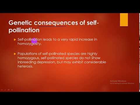 modes of pollination(self pollination)-plant breeding