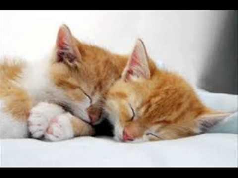 Những chú mèo đáng yêu nhất thế giới