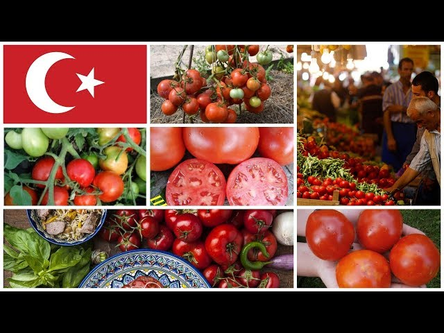 Настоящие СОРТА томатов из Турции: удивят вас своим вкусом и урожайностью!